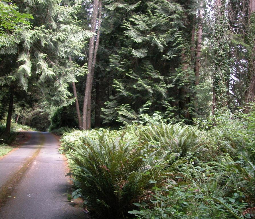 Land for Sale, ListingId:24462582, location: -Lot 21 Arrow Point Dr NE Bainbridge Island 98110
