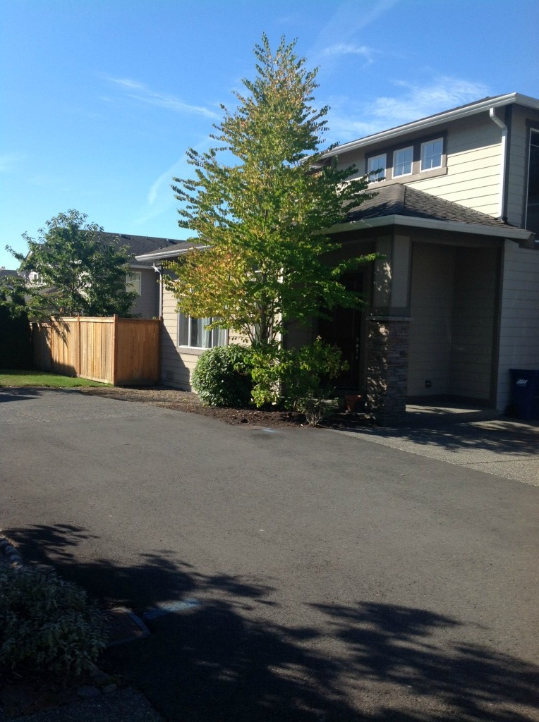 Rental Homes for Rent, ListingId:28823236, location: 6003 NE 1st Cir Renton 98059