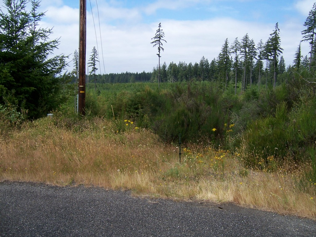 Land for Sale, ListingId:29097182, location: 132 E Aspen Place Shelton 98584