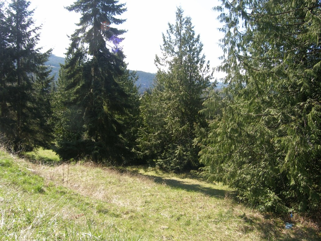 Land for Sale, ListingId:27544269, location: 1372 Fox Hollow Rd Sequim 98382