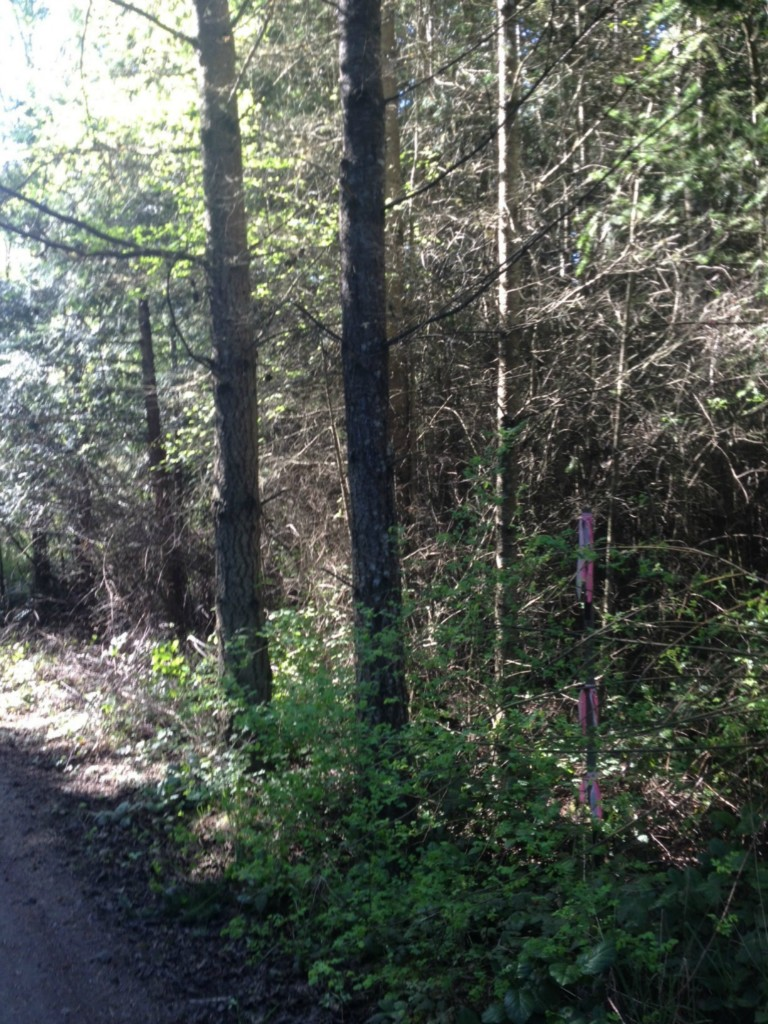Land for Sale, ListingId:25976767, location: Haada Laas Rd Pt Townsend 98368