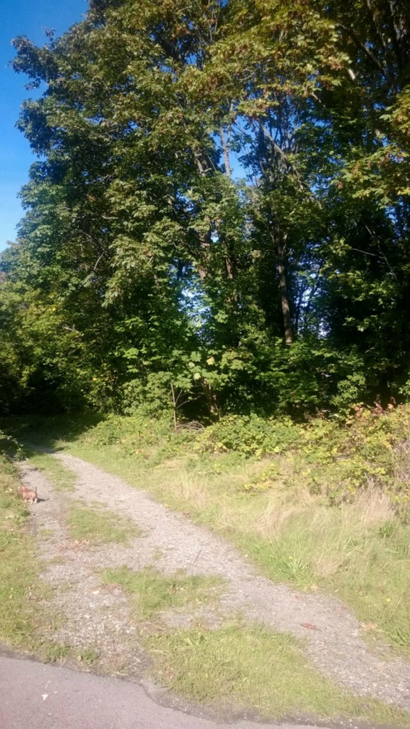 Land for Sale, ListingId:24913277, location: E N St Tacoma 98404