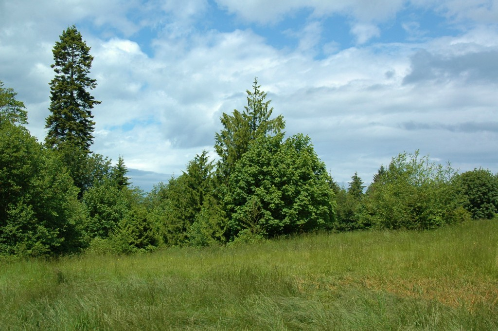 Land for Sale, ListingId:28335909, location: xxx Hwy 3 Poulsbo 98370
