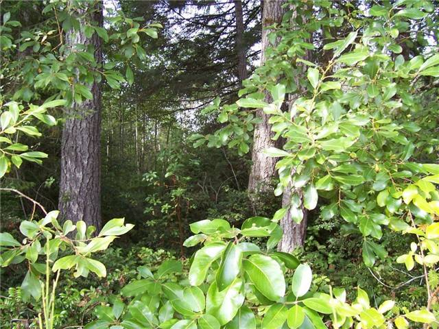 Land for Sale, ListingId:28621333, location: -xxx Willopa Rd Shelton 98584