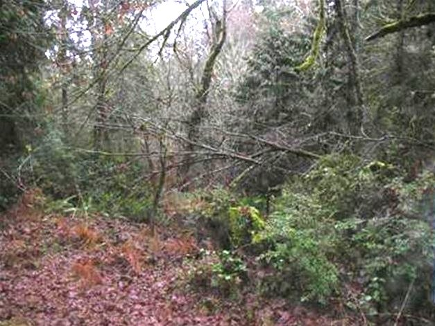 Land for Sale, ListingId:25136227, location: 1-xx Sunset Hill Rd Shelton 98584
